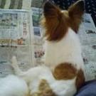 新聞が好きなレイラ
